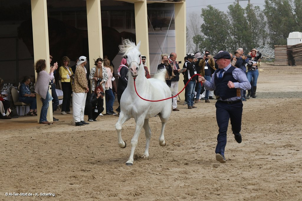 2017 Feb 13 - Prince Mohammed Stable