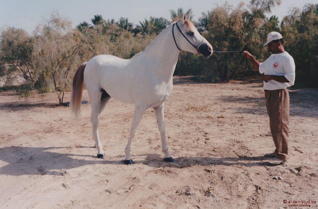 1996-WAHO-AbuDhabi-Bahrain-Day-01.jpg
