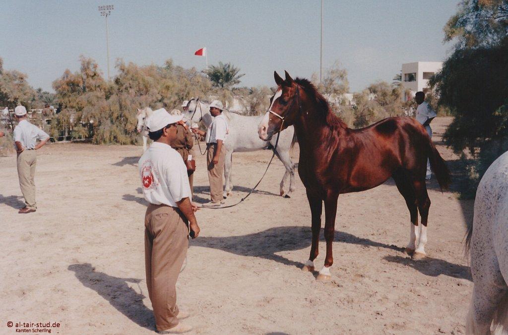 1996-WAHO-AbuDhabi-Bahrain-Day-03.jpg