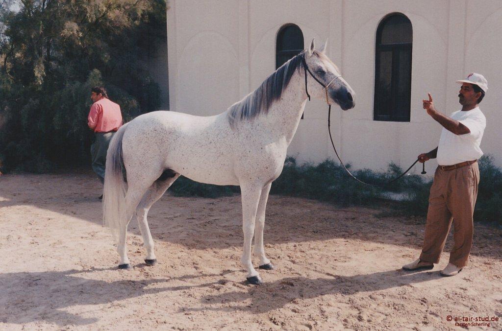1996-WAHO-AbuDhabi-Bahrain-Day-04.jpg