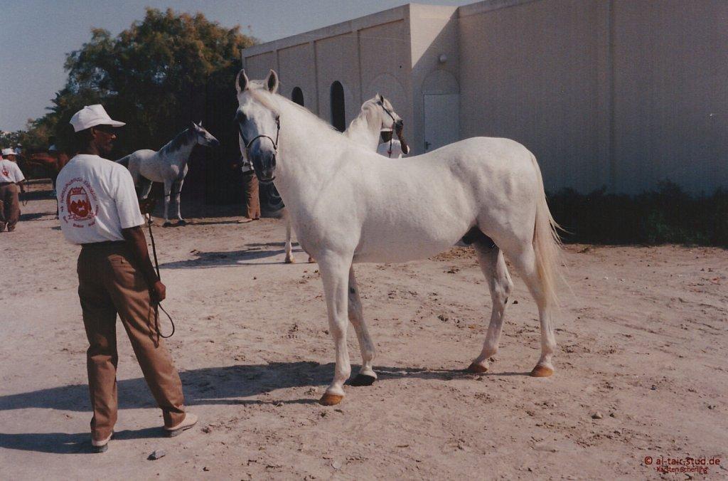 1996-WAHO-AbuDhabi-Bahrain-Day-05.jpg