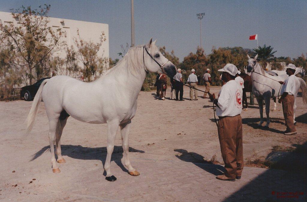 1996-WAHO-AbuDhabi-Bahrain-Day-06.jpg