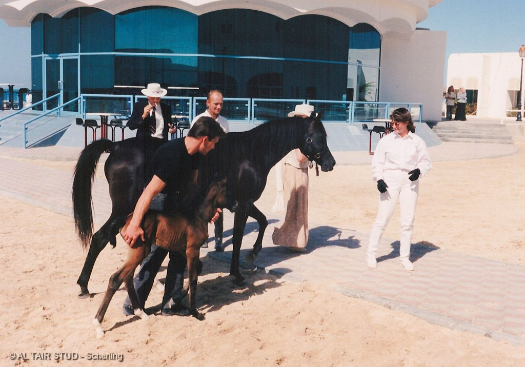 1996 Nov 16 - Abu Dhabi - In memory of Patrick Swayze