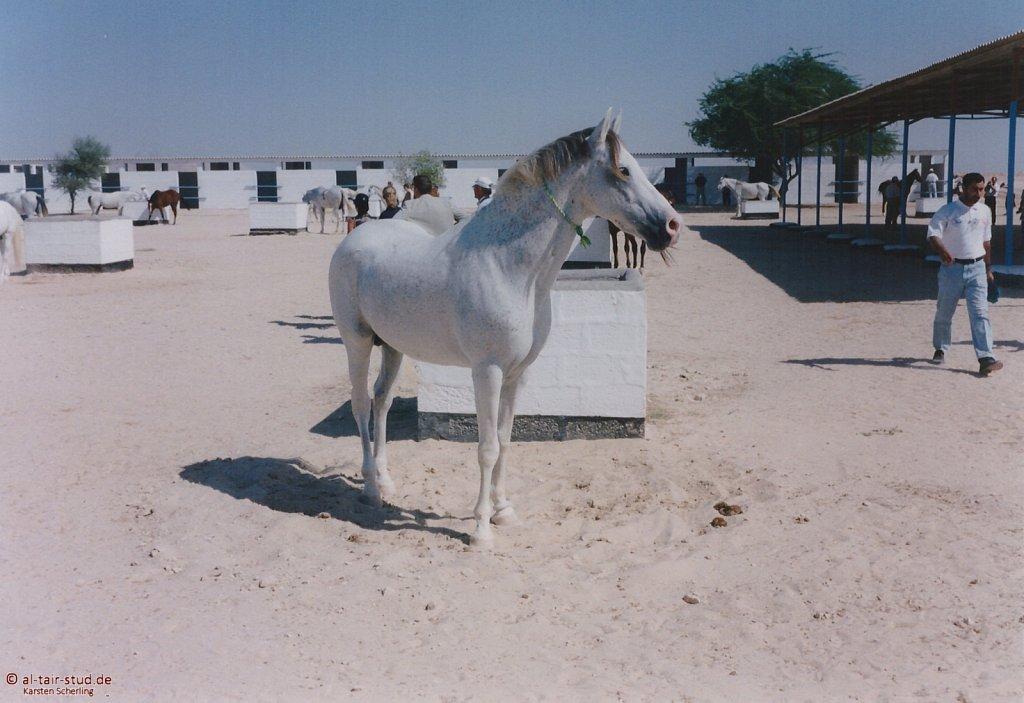1998-WAHO-Bahrain-03.jpg