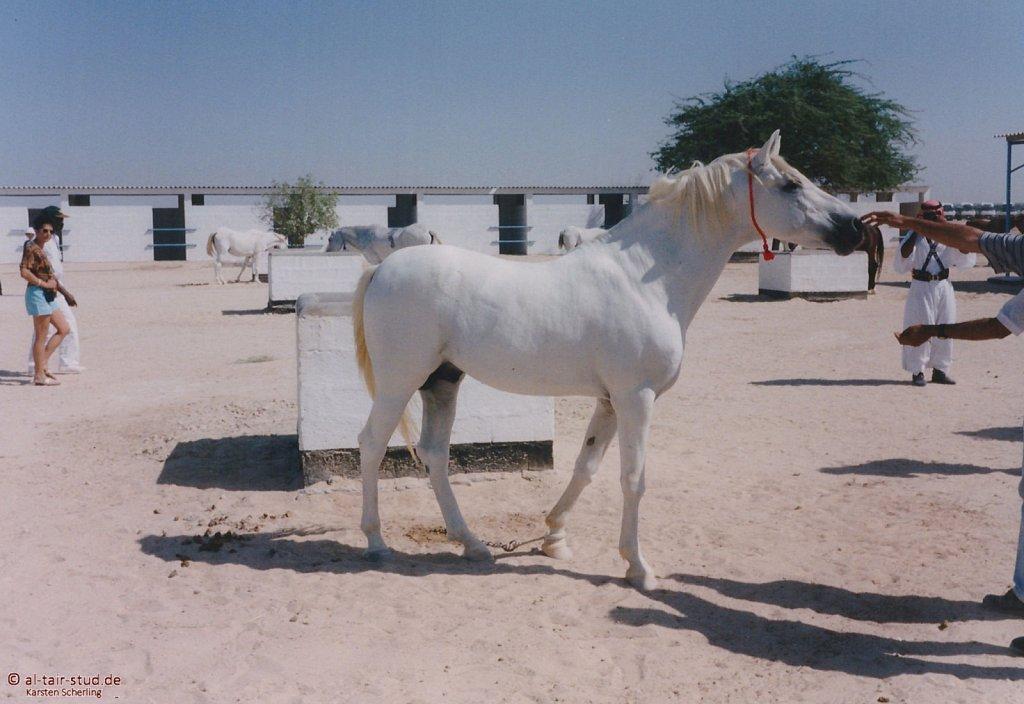 1998-WAHO-Bahrain-04.jpg