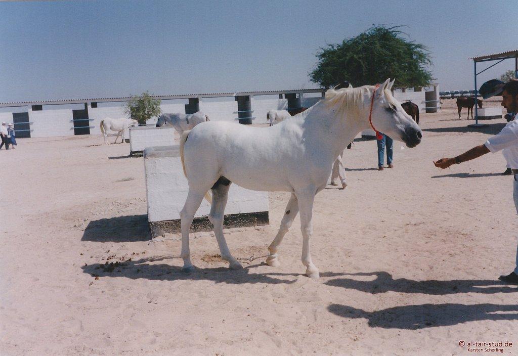 1998-WAHO-Bahrain-05.jpg