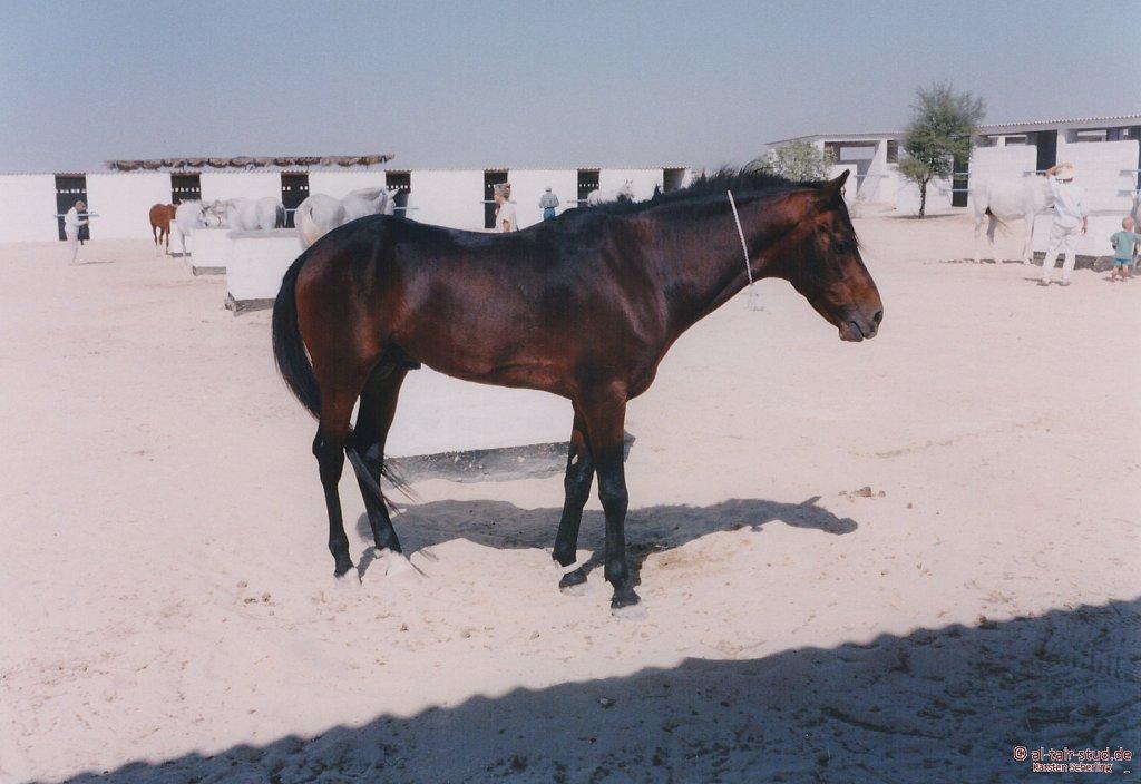 1998-WAHO-Bahrain-09.jpg