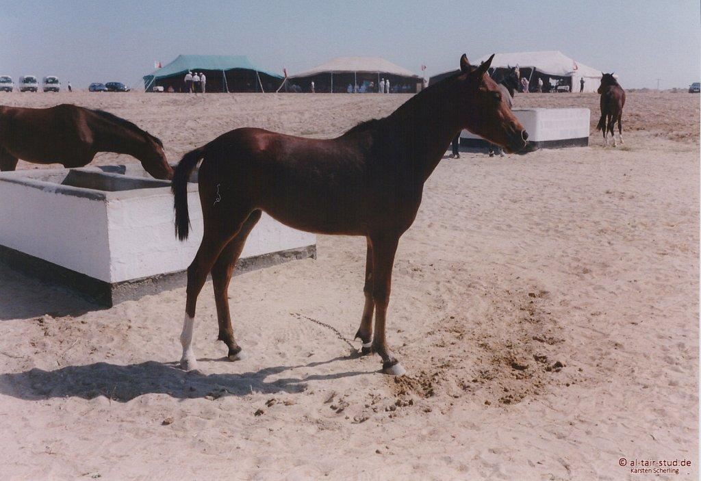 1998-WAHO-Bahrain-13.jpg
