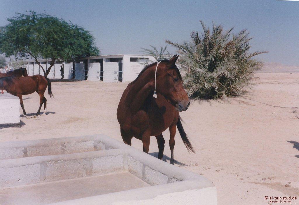 1998-WAHO-Bahrain-14.jpg