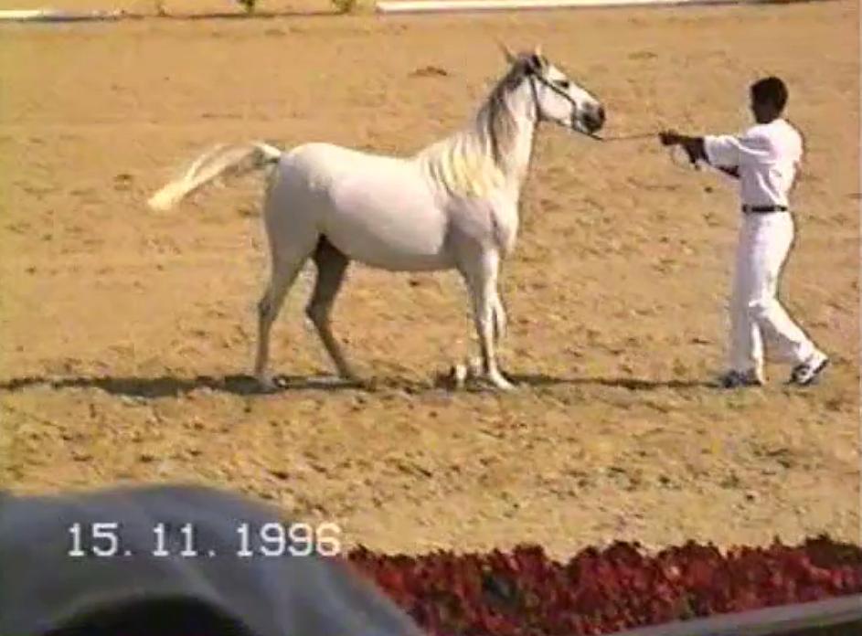 1996 Nov 15 - A Day in Bahrain Video