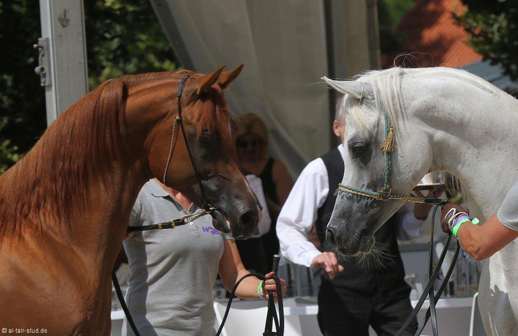 Noble Festival - Day I - Horses