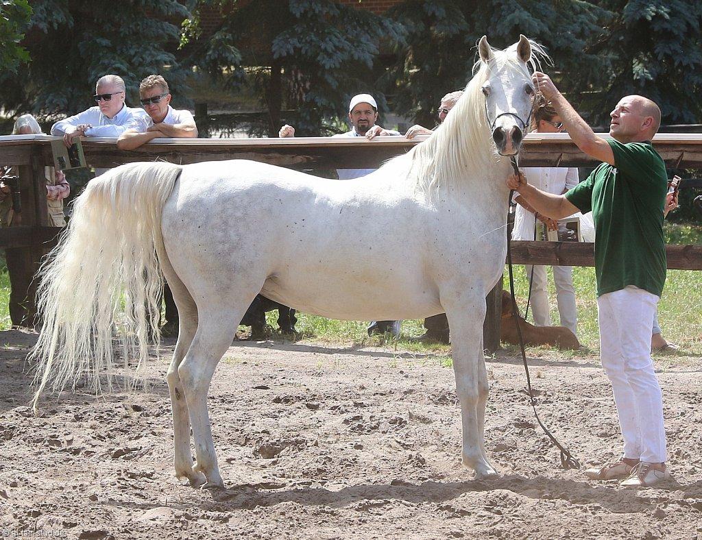 Horses of a celebration