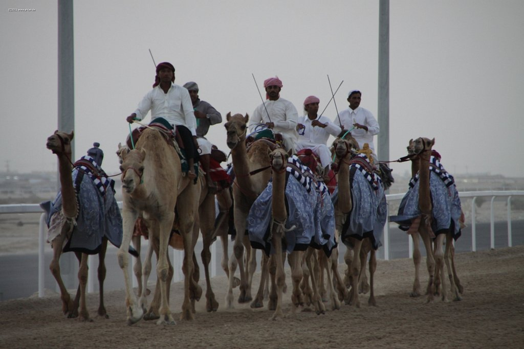 2011 Nov  05 - Camel racing