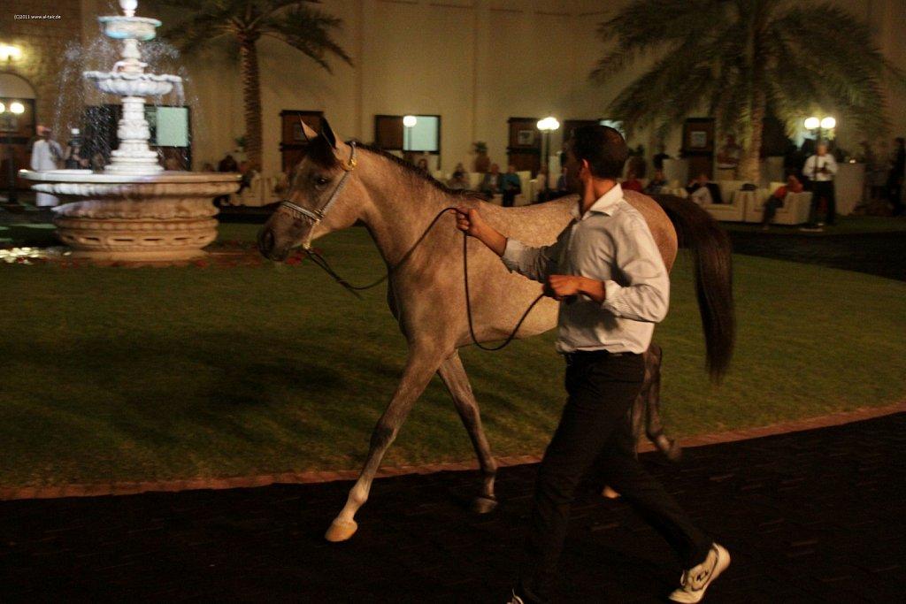 WAHO111107KSL-Al-Shahania-069.jpg