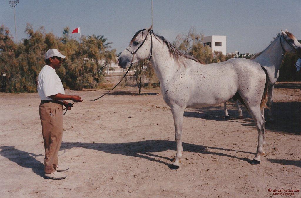 1996 WAHO Abu Dhabi (Bahrain, Dubai, Sharjah)