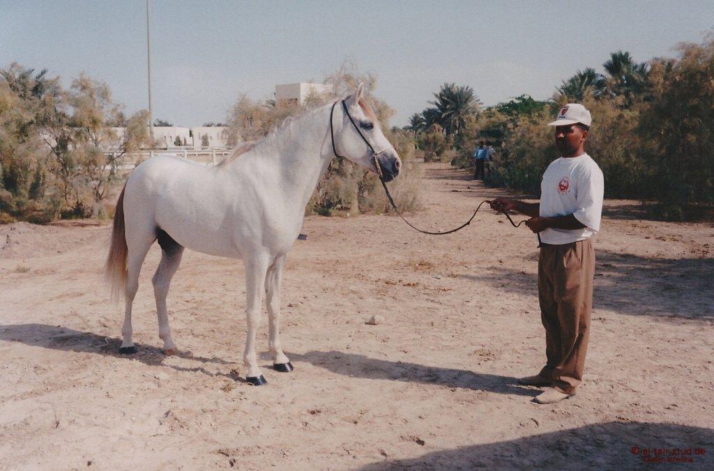 1996-WAHO-AbuDhabi-Bahrain-Day-02.jpg