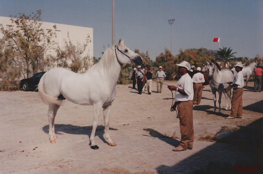 1996-WAHO-AbuDhabi-Bahrain-Day-08.jpg