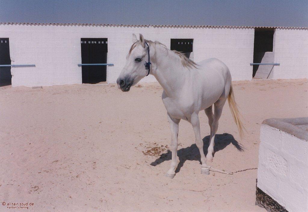 1998-WAHO-Bahrain-07.jpg