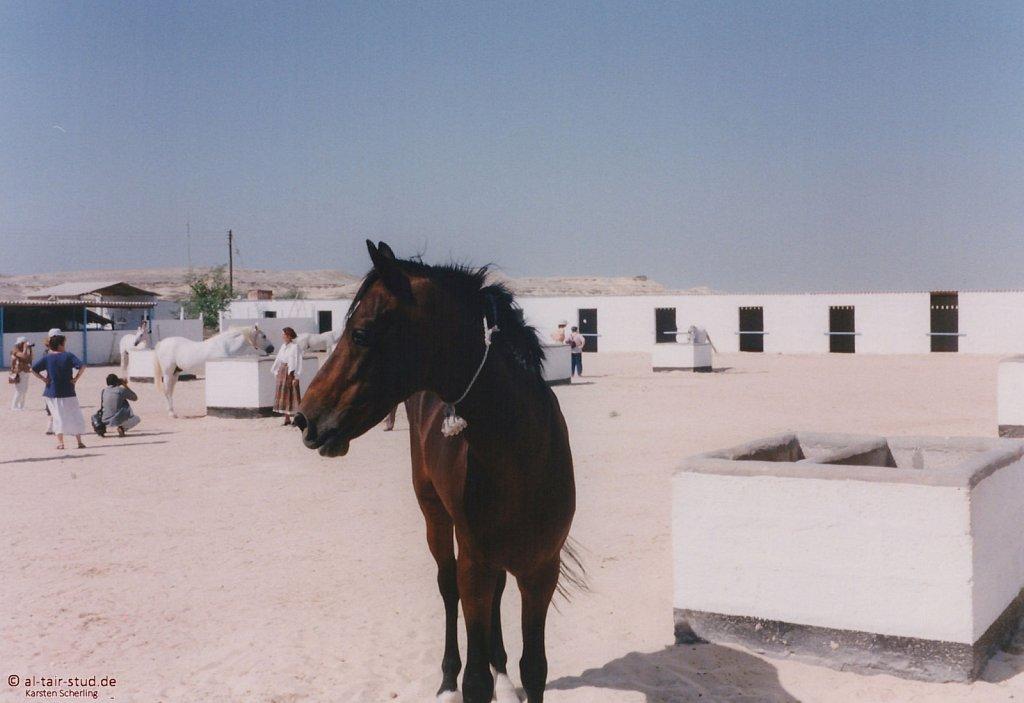1998-WAHO-Bahrain-08.jpg