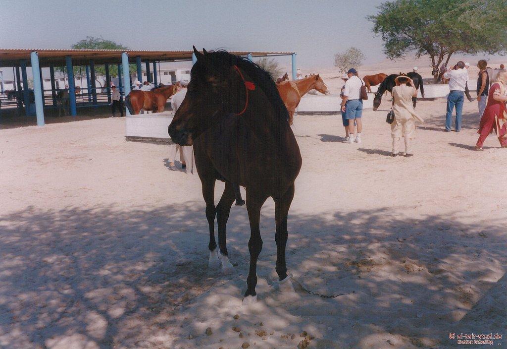 1998-WAHO-Bahrain-11.jpg