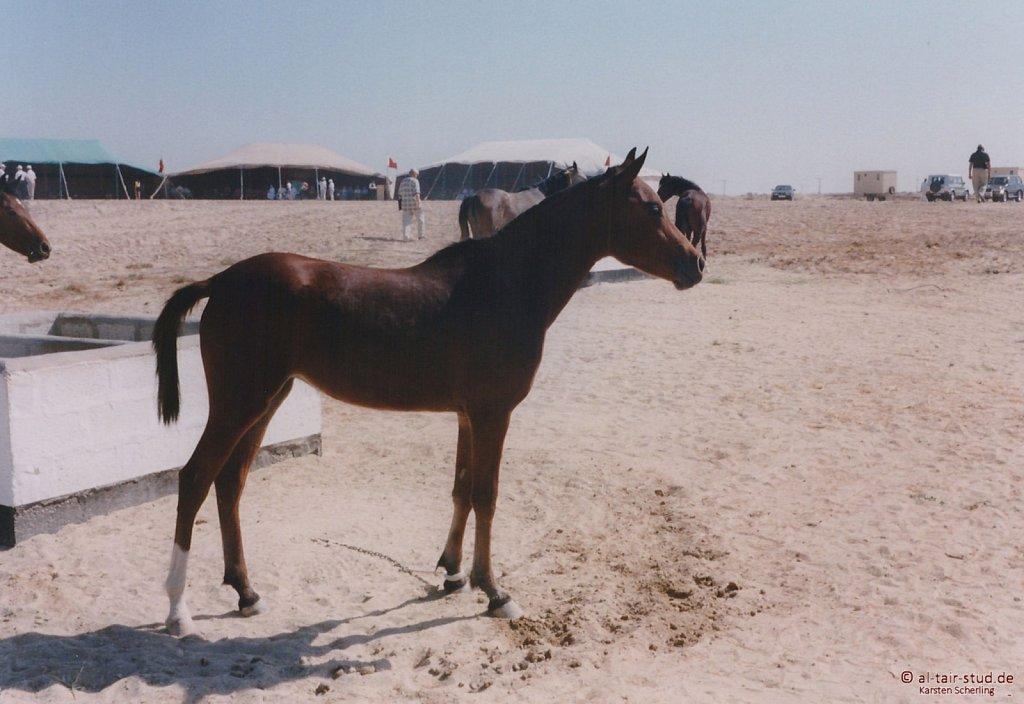 1998-WAHO-Bahrain-12.jpg
