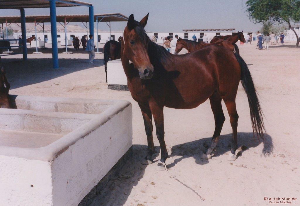 1998-WAHO-Bahrain-15.jpg