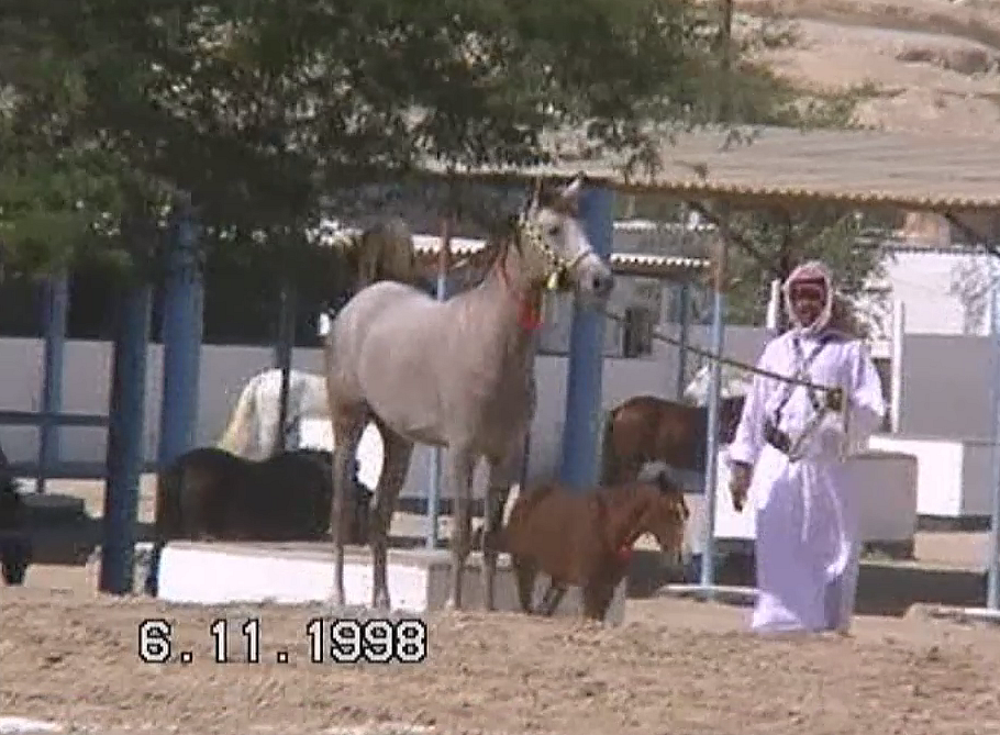 1998 Nov 06 - Desert Stable Video