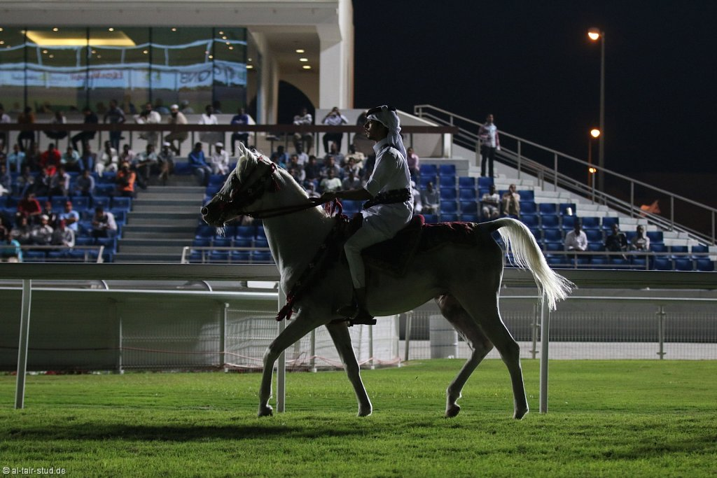 20141112-015-RacingEquestClub-IMG-3550-o.jpg