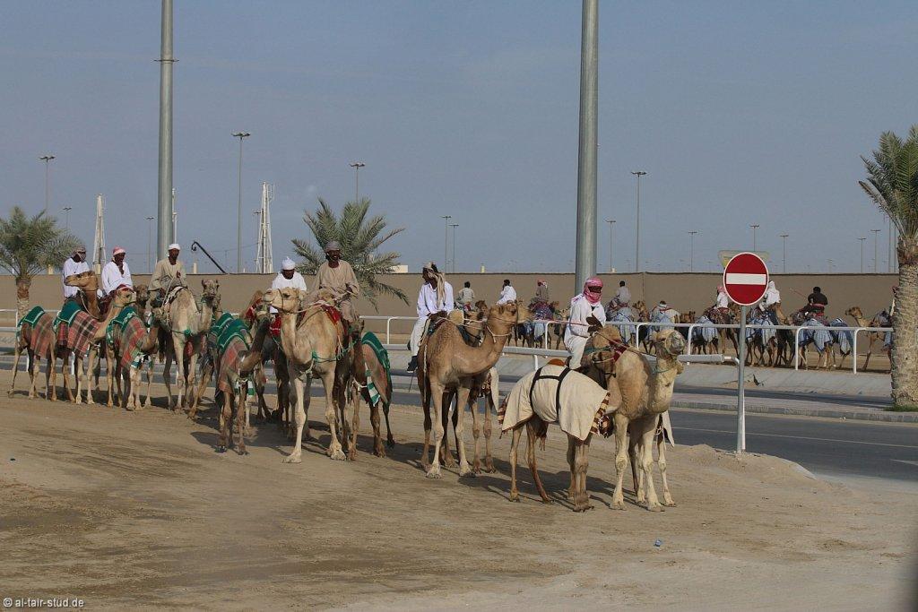 20141115b-049-CamelRace-IMG-5415-o.jpg