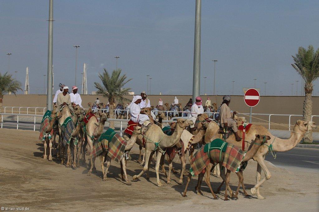 20141115b-050-CamelRace-IMG-5423-o.jpg