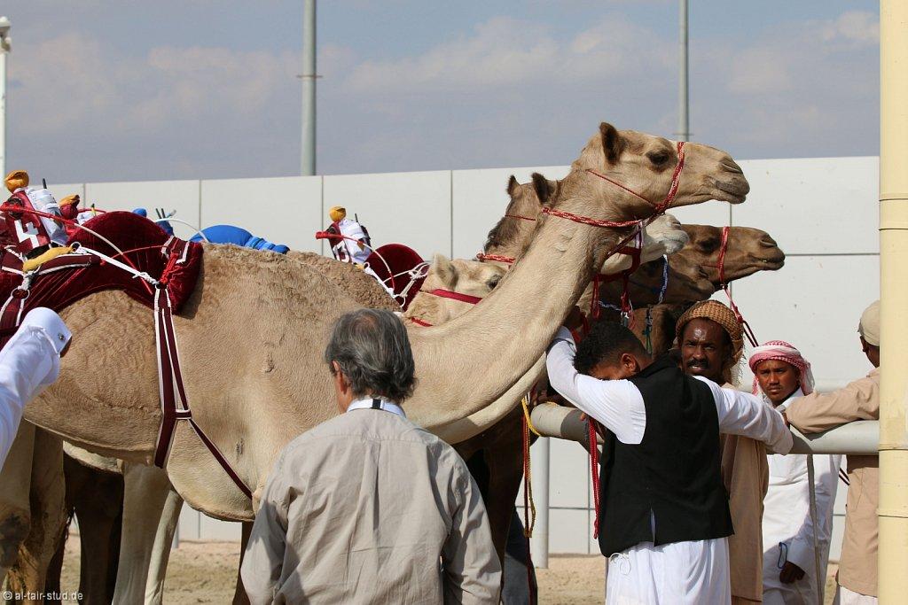 20141115b-015-CamelRace-IMG-5102-o.jpg