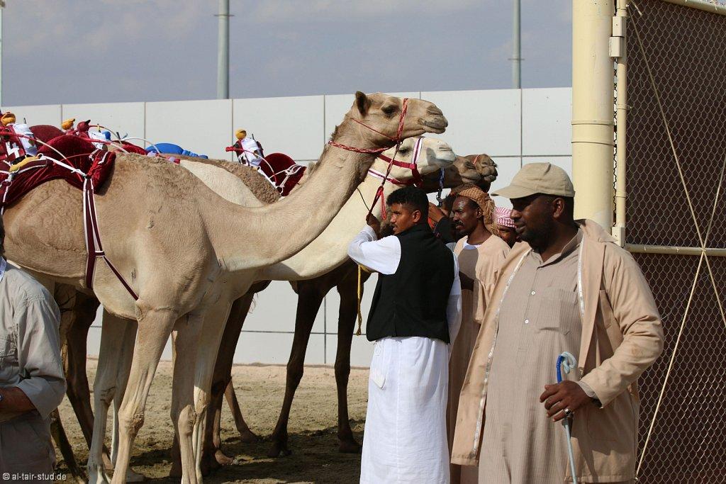 20141115b-016-CamelRace-IMG-5111-o.jpg