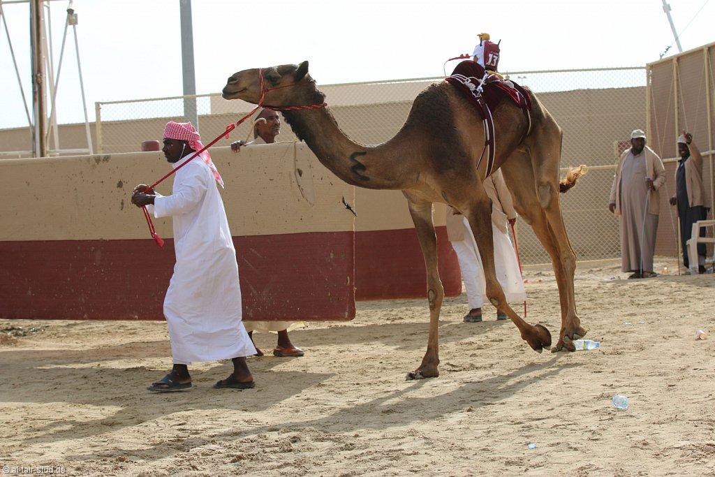 20141115b-017-CamelRace-IMG-5120-o.jpg