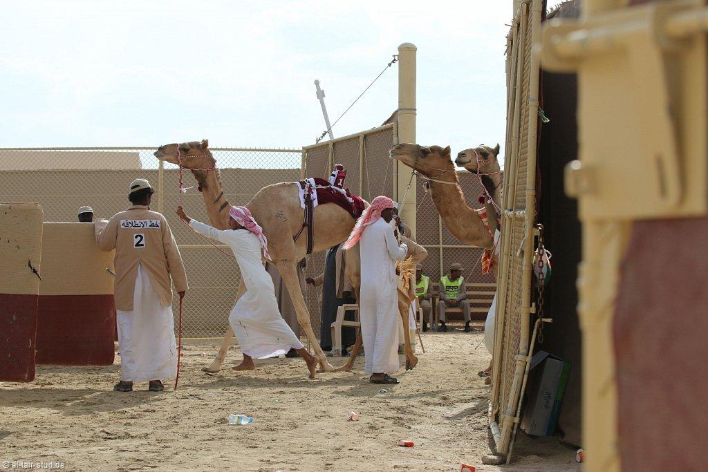 20141115b-018-CamelRace-IMG-5124-o.jpg