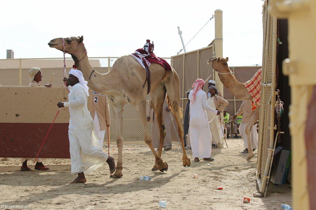 20141115b-019-CamelRace-IMG-5129-o.jpg
