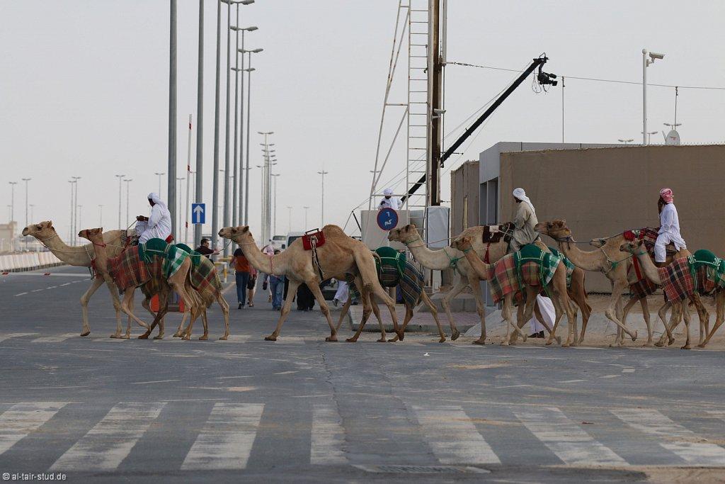 20141115b-029-CamelRace-IMG-5262-o.jpg