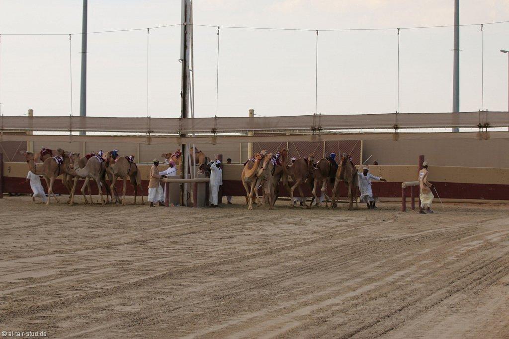 20141115b-037-CamelRace-IMG-5331-o.jpg