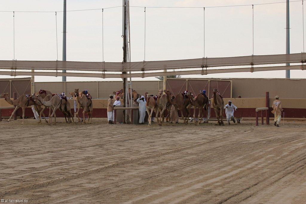 20141115b-038-CamelRace-IMG-5334-o.jpg