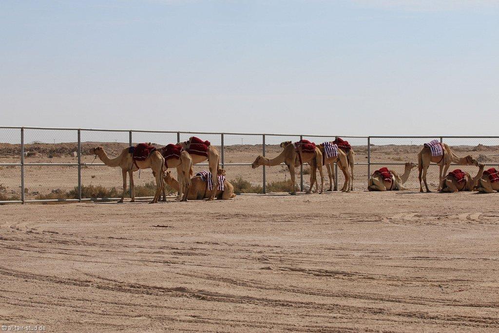 20141116a-036-CamelFarm-IMG-6272-o.jpg