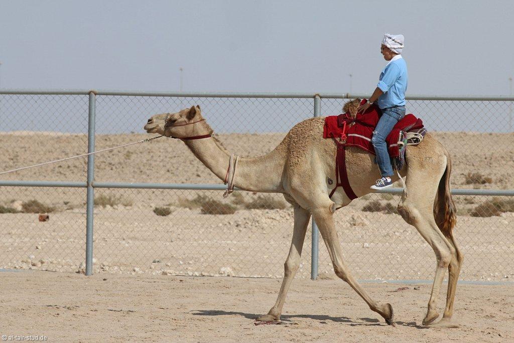 20141116a-056-CamelFarm-IMG-6316-o.jpg