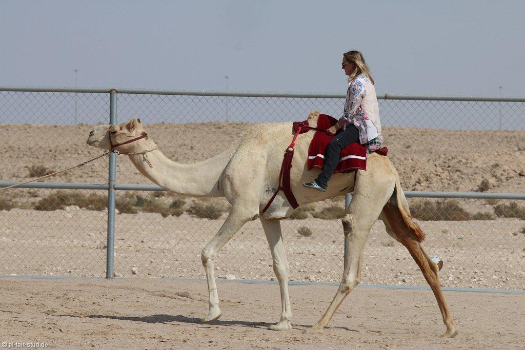 20141116a-057-CamelFarm-IMG-6318-o.jpg
