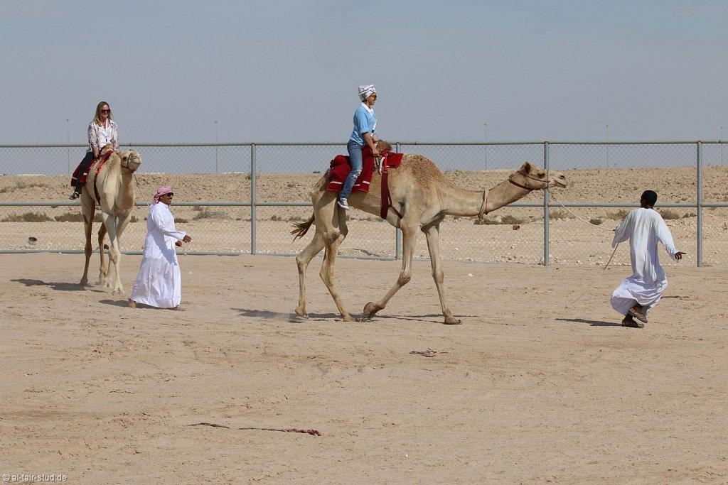 20141116a-058-CamelFarm-IMG-6322-o.jpg