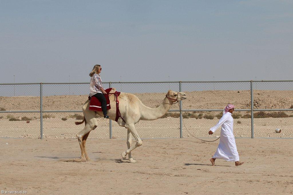 20141116a-059-CamelFarm-IMG-6323-o.jpg