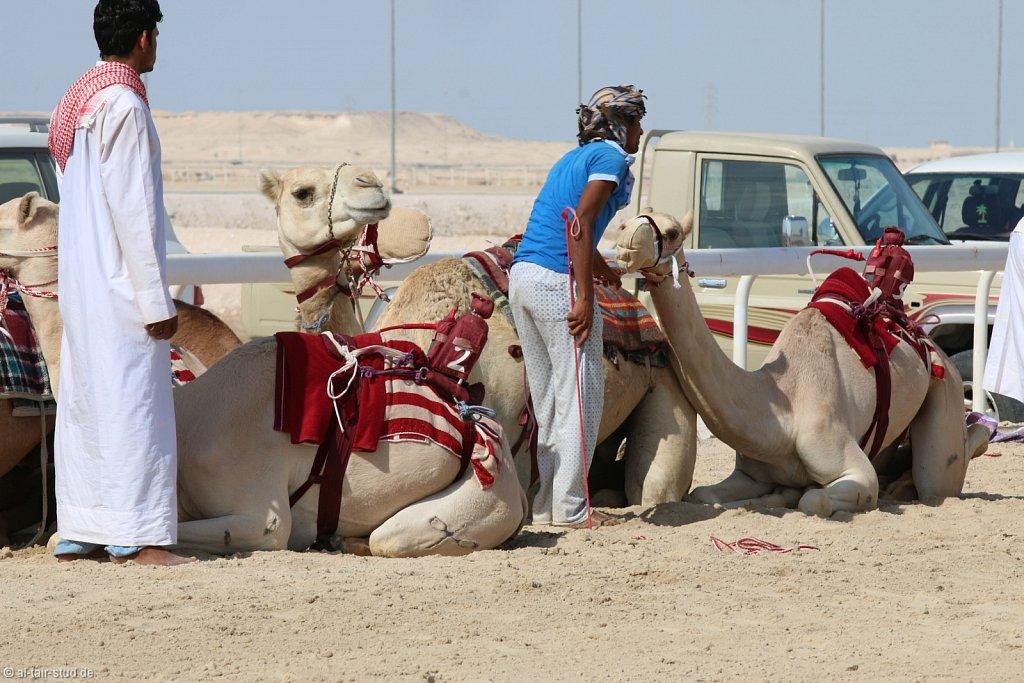 20141116a-003-CamelFarm-IMG-6146-o.jpg