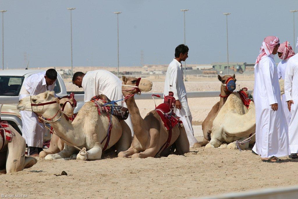 20141116a-005-CamelFarm-IMG-6156-o.jpg