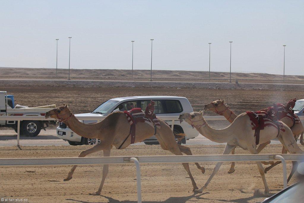 20141116a-008-CamelFarm-IMG-6188-o.jpg