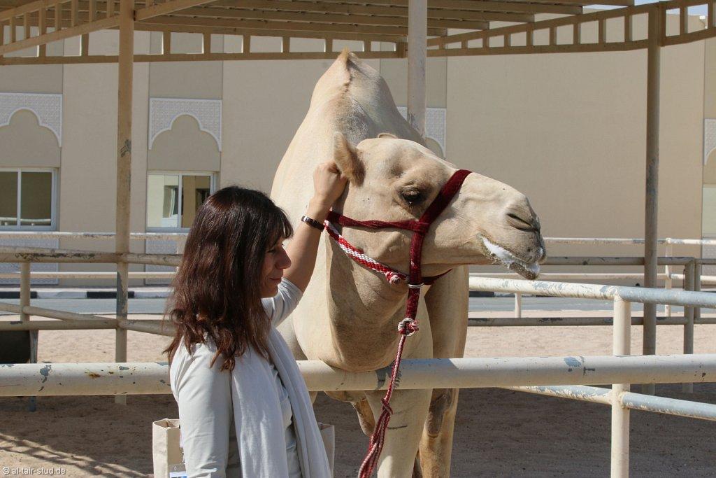 20141116a-021-CamelFarm-IMG-6237-o.jpg