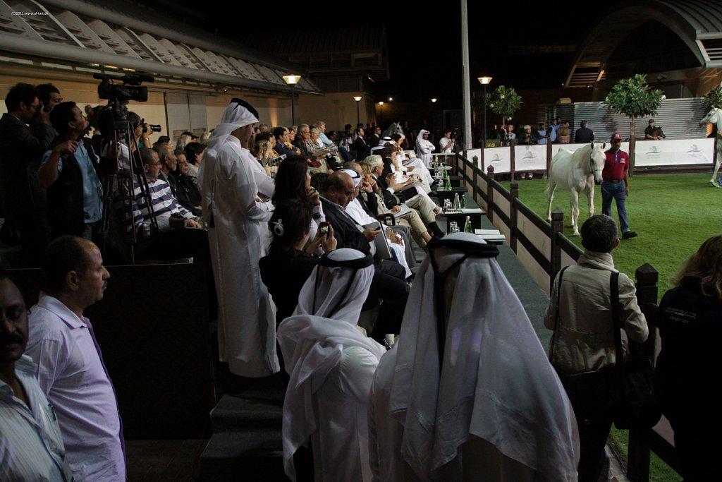WAHO111103KSL-Al-Shaqab-044.jpg