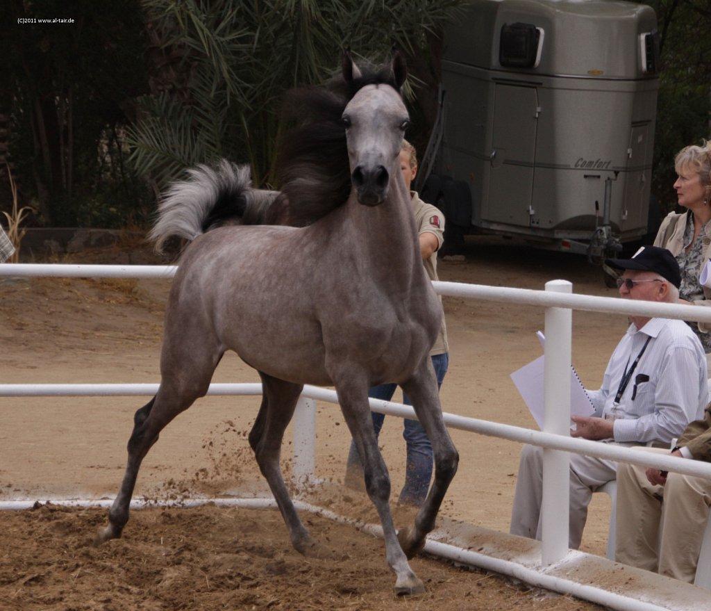 WAHO111107KSL-Al-Nasser-037.jpg