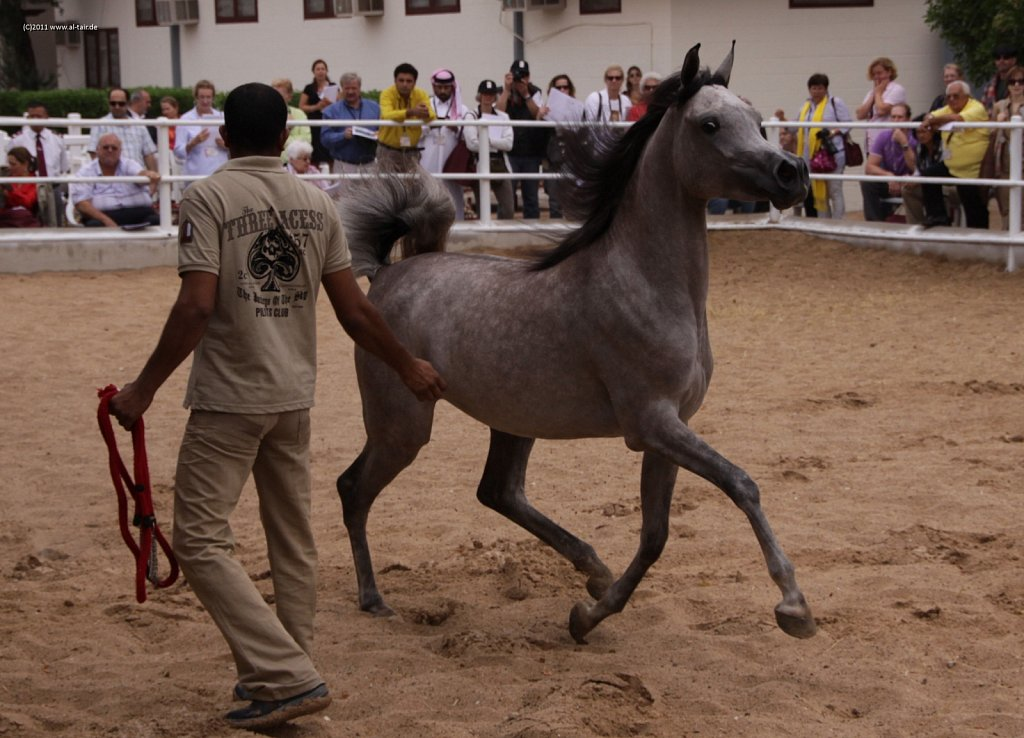 WAHO111107KSL-Al-Nasser-038.jpg